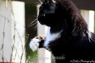 Kitties(web)_0012