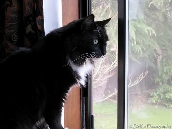 Kitties0307(web)_0002