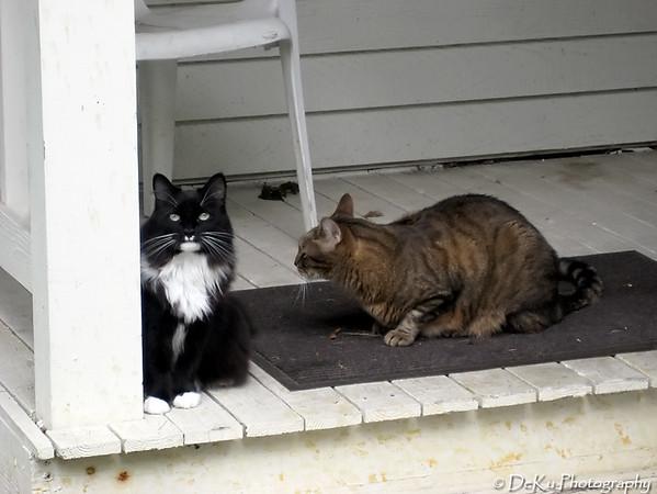 Kitties0807(orig)_0001