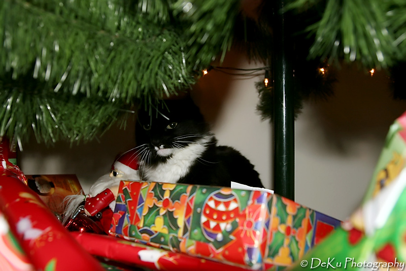 Christmas2007(web)_0003