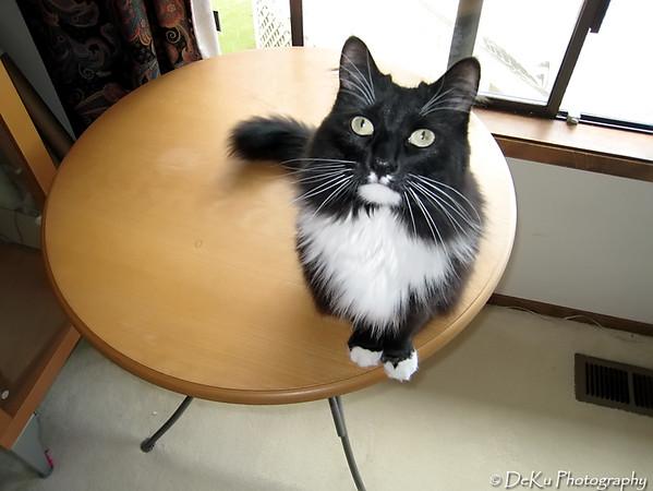 Kitties0307(web)_0001