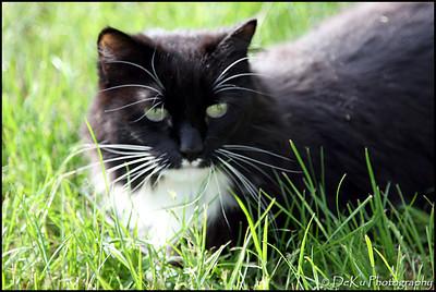 Kitties0508(orig)_0003