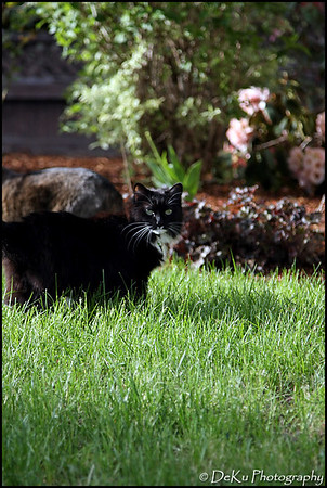 Kitties0508(orig)_0001