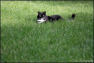 Kitties0508(orig)_0007