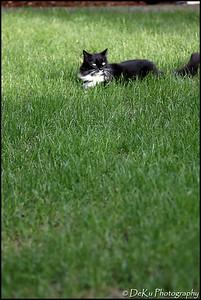 Kitties0508(orig)_0005