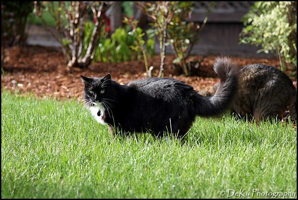 Kitties0508(orig)_0002