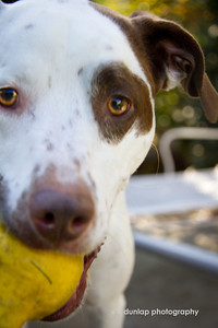 """10.22.12 = Grace in the Face  """"Dogs are not our whole life, but they make our lives whole."""" Roger Caras"""