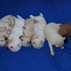 6 little angels at 10 days old