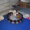pups at 3 weeks old
