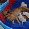 Sandy and pups at 1 week old