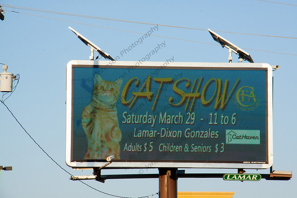 Greater Baton Rouge Cat Club Show  March 29,2014