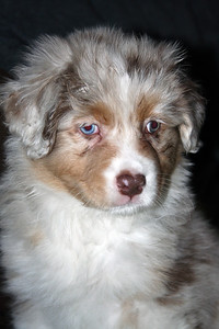 "Meet ""Haley""...her first day home (11/22/2008)"