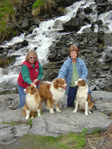 Our puppy's grandfather, Ben (in the middle), and mother, Liz (right). (photo courtesy of Sheri Nelson)