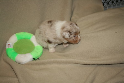 Here's our girl! (almost 4 weeks old) (photo courtesy of Sheri Nelson)