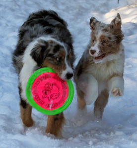 I really, really want that Frisbee!
