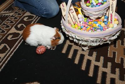 4-20-2014 Piggie Easter