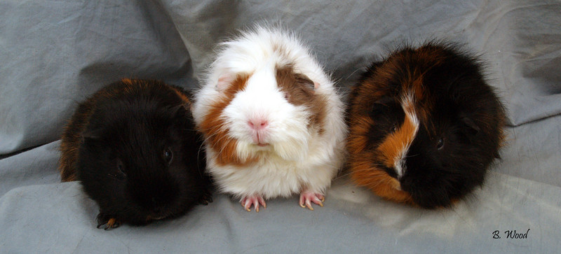 GP 2237<br /> <br /> L-R:  Squeezicks, Ms. Audacious, Mr. Quixote