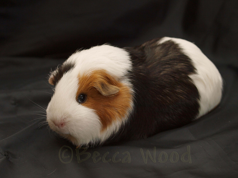 GP 09SE0893<br /> <br /> Squiggly Pig