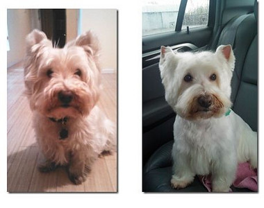 Before & after grooming.