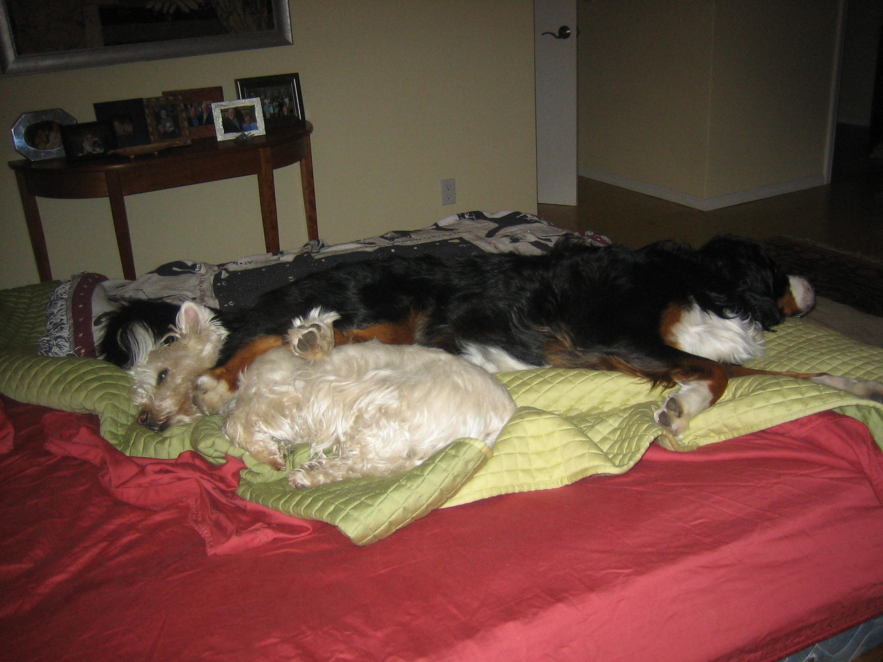 Gus and Noodles asleep on my bed