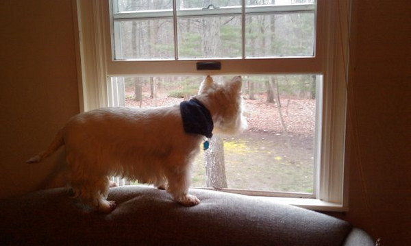 Checking out the view at my dad & stepmother's house in CT. Where better to perch than on a sofa?