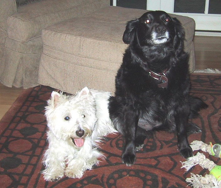 Gus & Bandit.