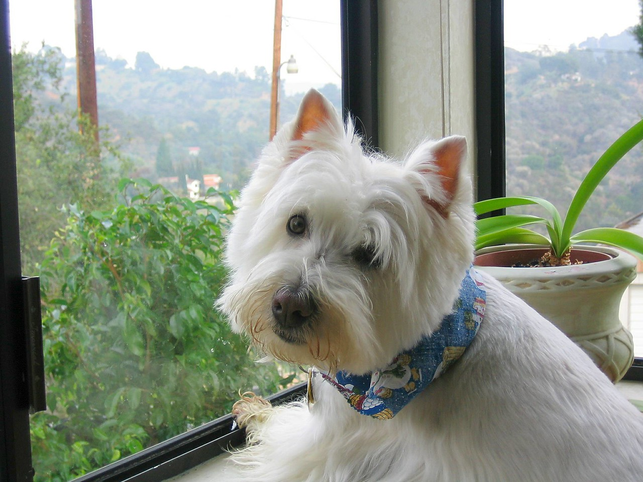 Gus checking out Laurel Canyon.
