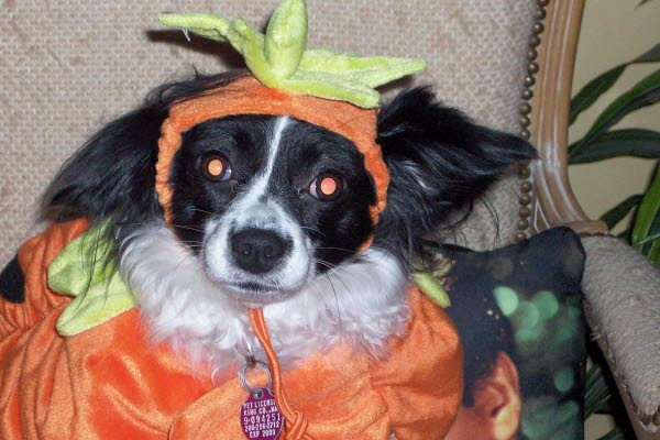 Miss Lily is one cute little pumpkin!