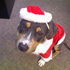 Daphne brings holiday cheer to everyone she meets this Halloween.