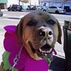 Boshi pretends to be a 190-pound flower.