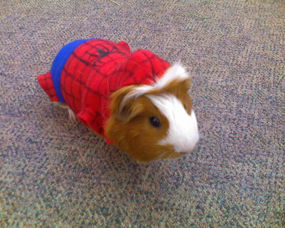 Sebastian is SpiderPig!