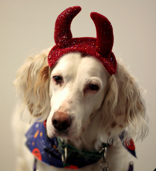 Lily is no devil dog, but she wears it so well!
