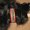 "Albi wearing Happy Halloween on orange 1 1/2"" wide collar"