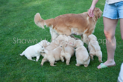 Puppies with Shelly_081309_0002