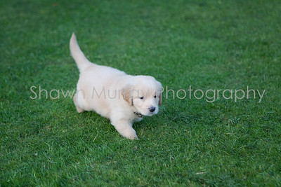 Puppies with Shelly_081309_0005