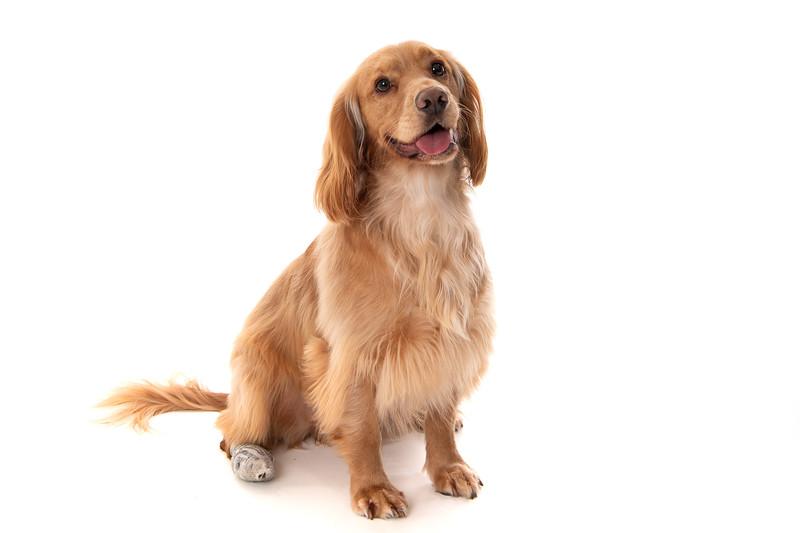 Doggies_010