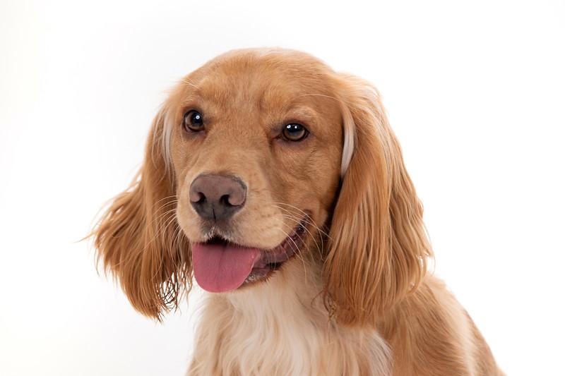 Doggies_016