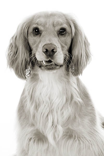 Doggies_017 copy