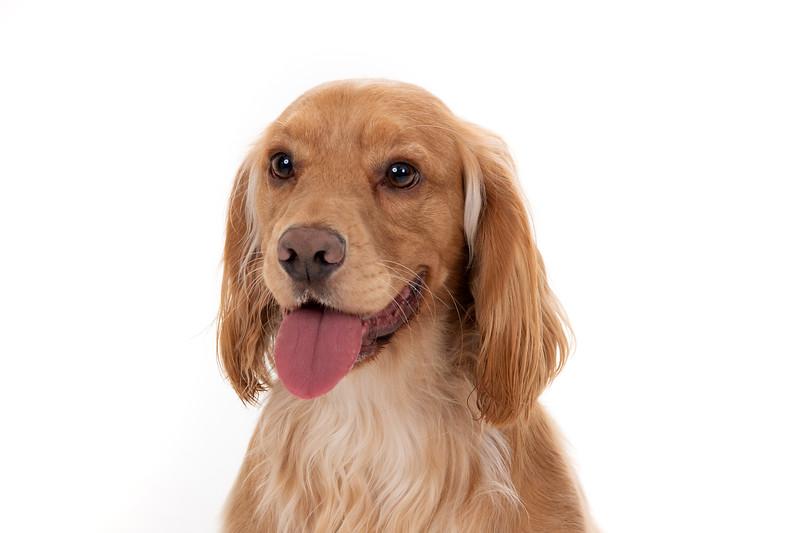 Doggies_015