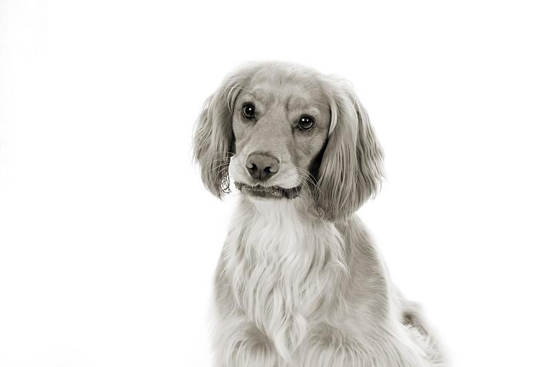 Doggies_018 copy