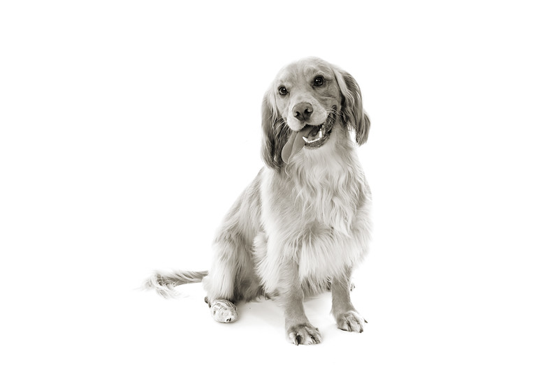 Doggies_006 copy