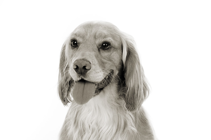 Doggies_015 copy