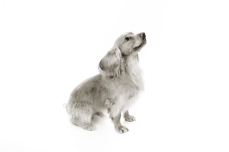 Doggies_001 copy