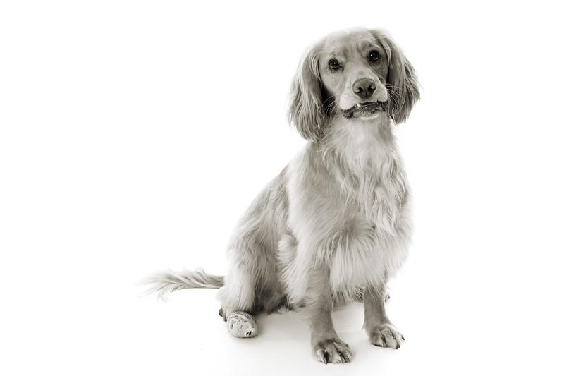 Doggies_011 copy