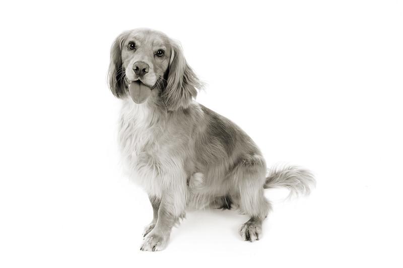 Doggies_014 copy