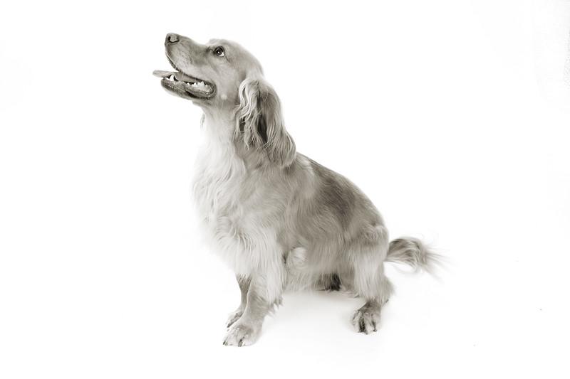 Doggies_013 copy