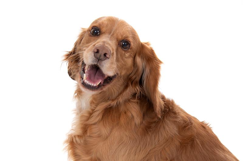 Doggies_023
