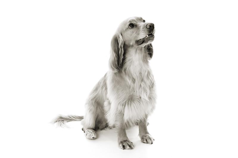 Doggies_008 copy