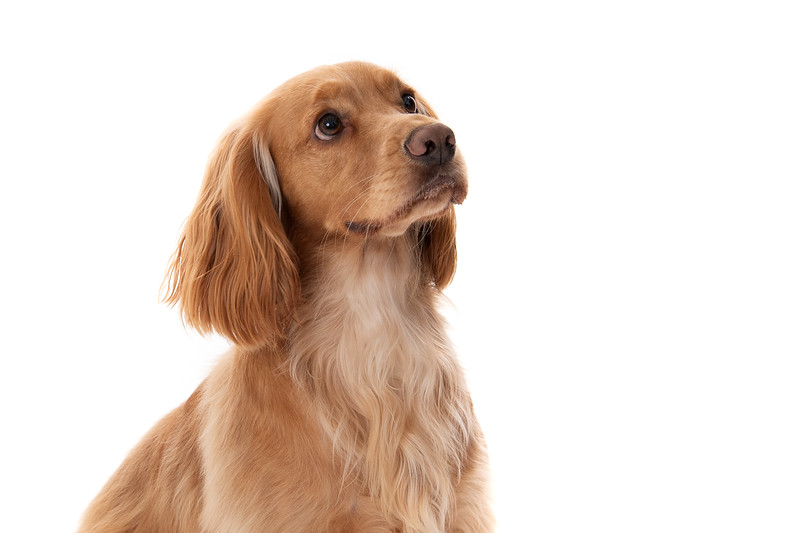 Doggies_009