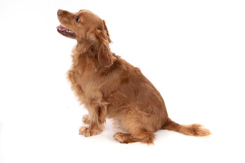 Doggies_020